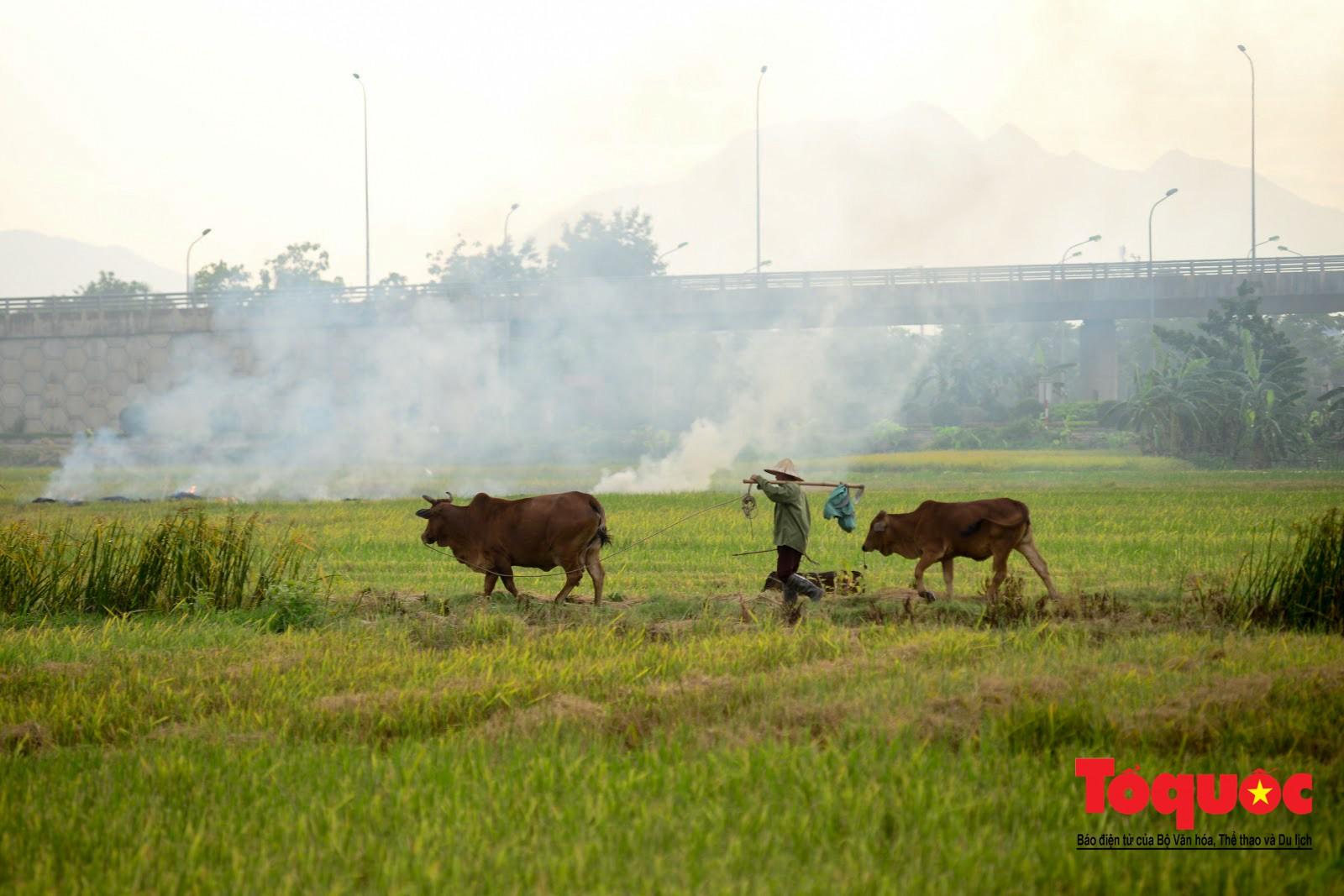 Nông dân ngoại thành vô tình khiến nội thành Hà Nội có một lớp sương mờ6