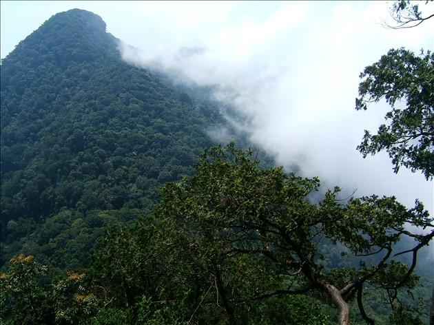 Đà Nẵng công bố diện tích rừng khu bảo tồn Bà Nà – Núi Chúa ngày càng tăng lên - Ảnh 2.