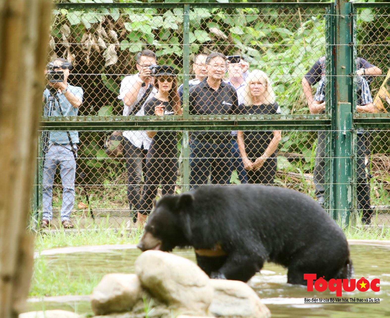 Ngôi sao Hollywood người Mỹ gốc Việt Maggie Q thăm Trung tâm Cứu hộ Gấu Việt Nam và đặt tên cho một chú gấu2