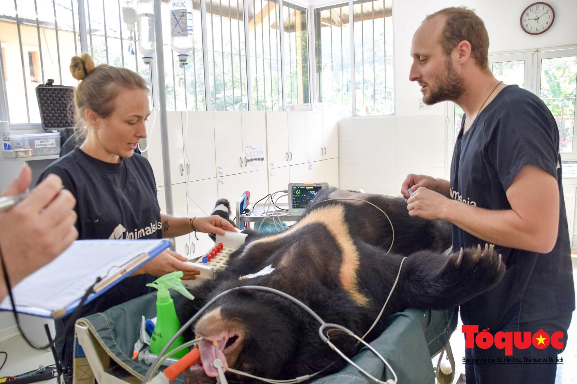 Ngôi sao Hollywood người Mỹ gốc Việt Maggie Q thăm Trung tâm Cứu hộ Gấu Việt Nam và đặt tên cho một chú gấu3