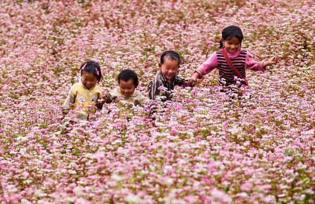 Lại một mùa hoa Tam giác mạch bung nở trên cao nguyên đá vẫy gọi du khách - Ảnh 1.