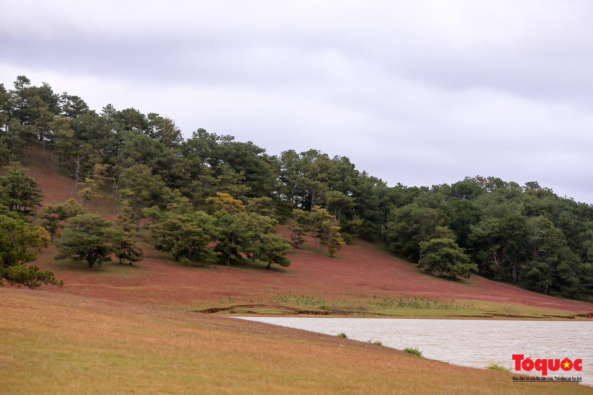 """Đồi cỏ hồng ở Đà Lạt đẹp như tranh sẽ khiến khách du lịch """"mê mẩn"""" - Ảnh 5."""
