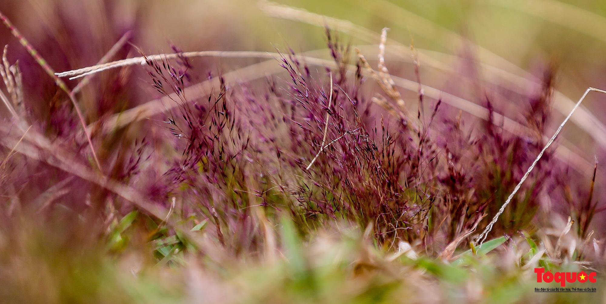 """Đồi cỏ hồng ở Đà Lạt đẹp như tranh sẽ khiến khách du lịch """"mê mẩn"""" - Ảnh 11."""