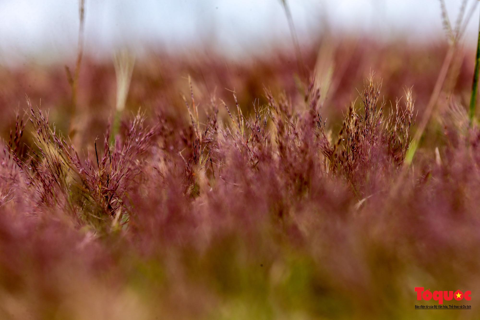 """Đồi cỏ hồng ở Đà Lạt đẹp như tranh sẽ khiến khách du lịch """"mê mẩn"""" - Ảnh 8."""
