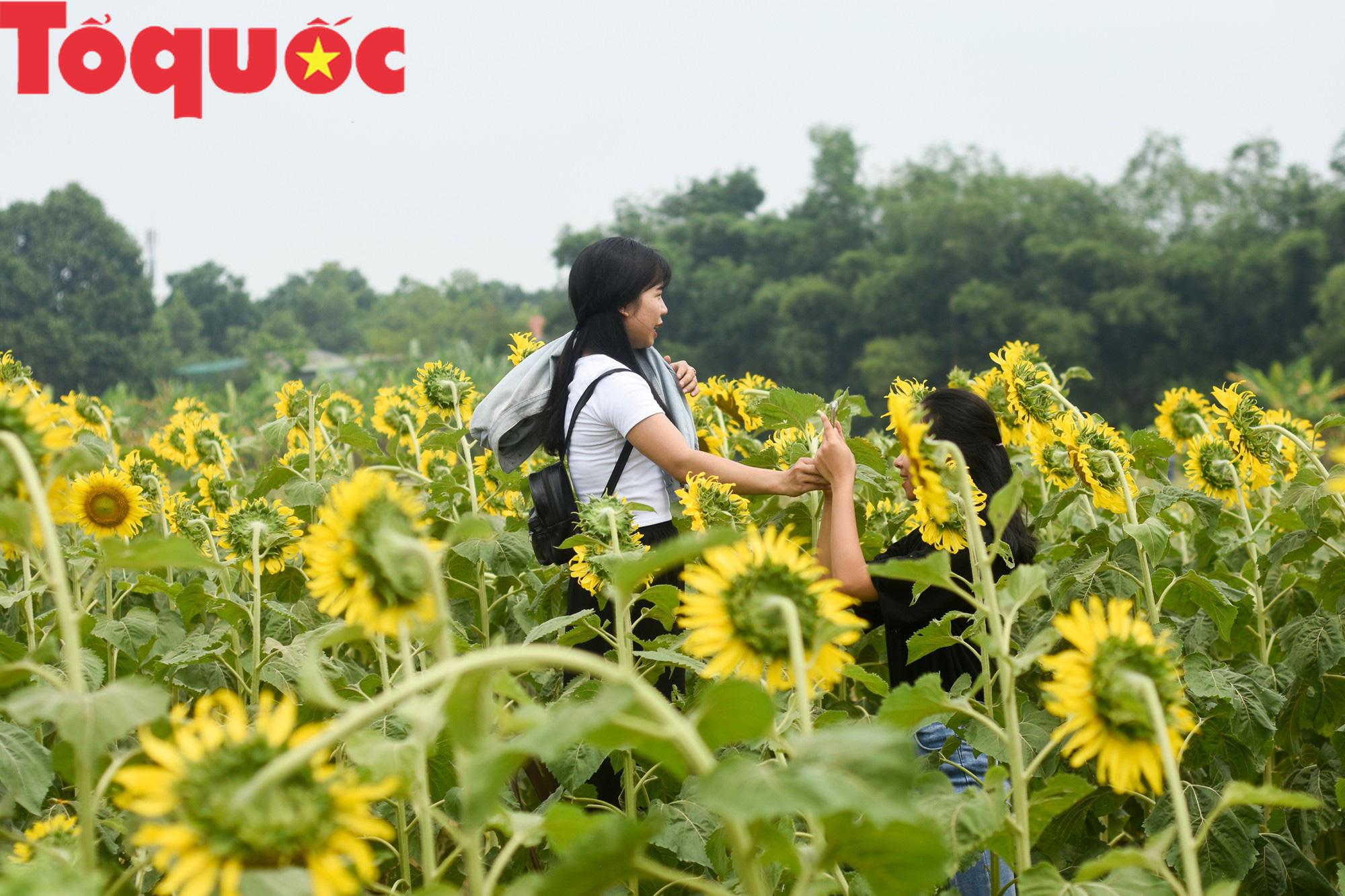 Hàng nghìn người đổ xô check in cánh đồng hoa hướng dương tại Huế - Ảnh 7.