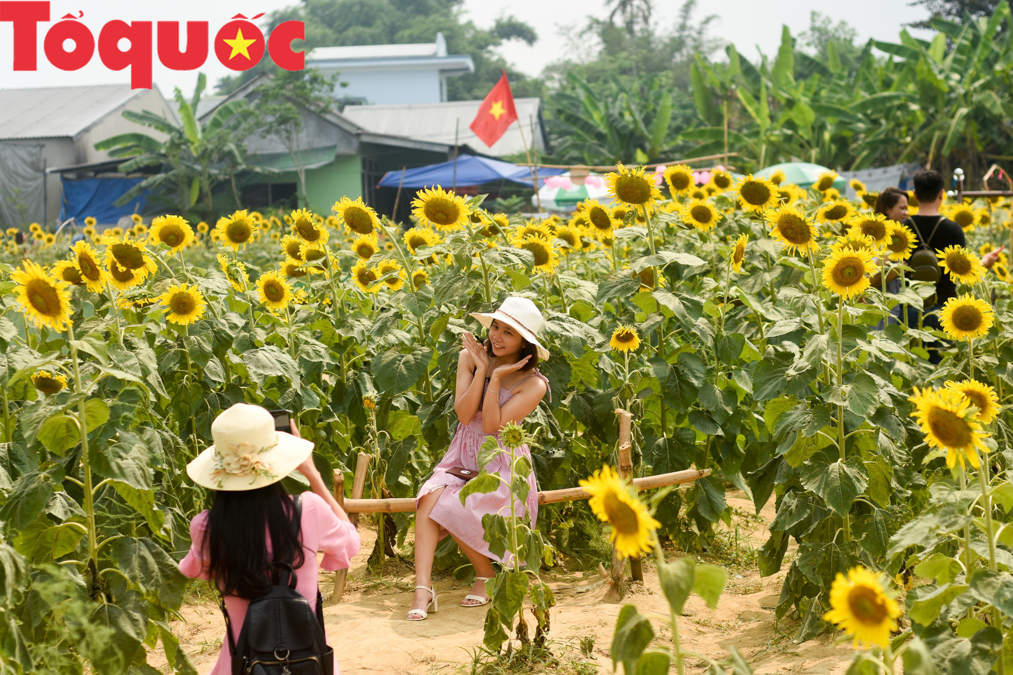 Hàng nghìn người đổ xô check in cánh đồng hoa hướng dương tại Huế - Ảnh 6.