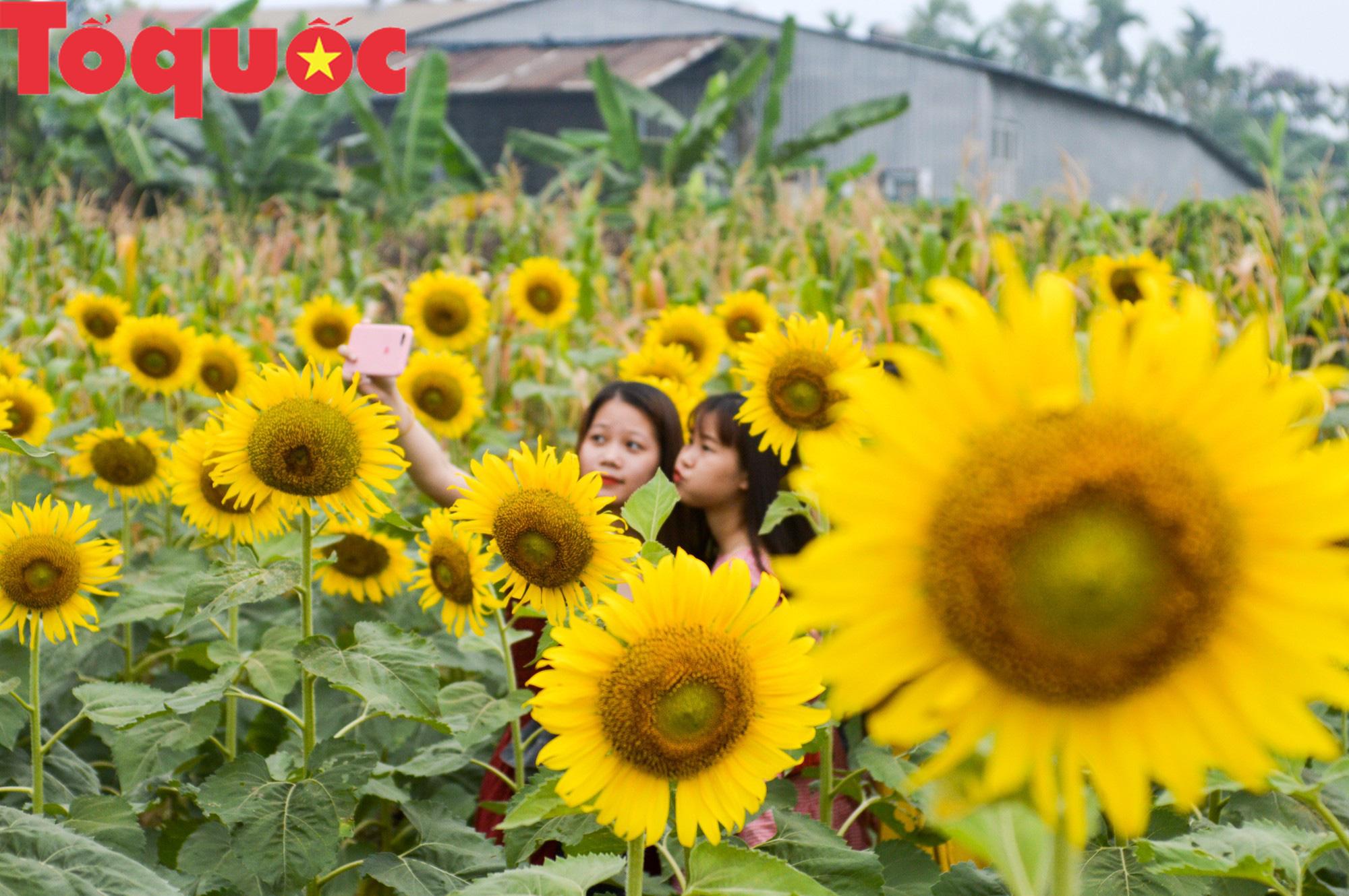 Hàng nghìn người đổ xô check in cánh đồng hoa hướng dương tại Huế - Ảnh 3.