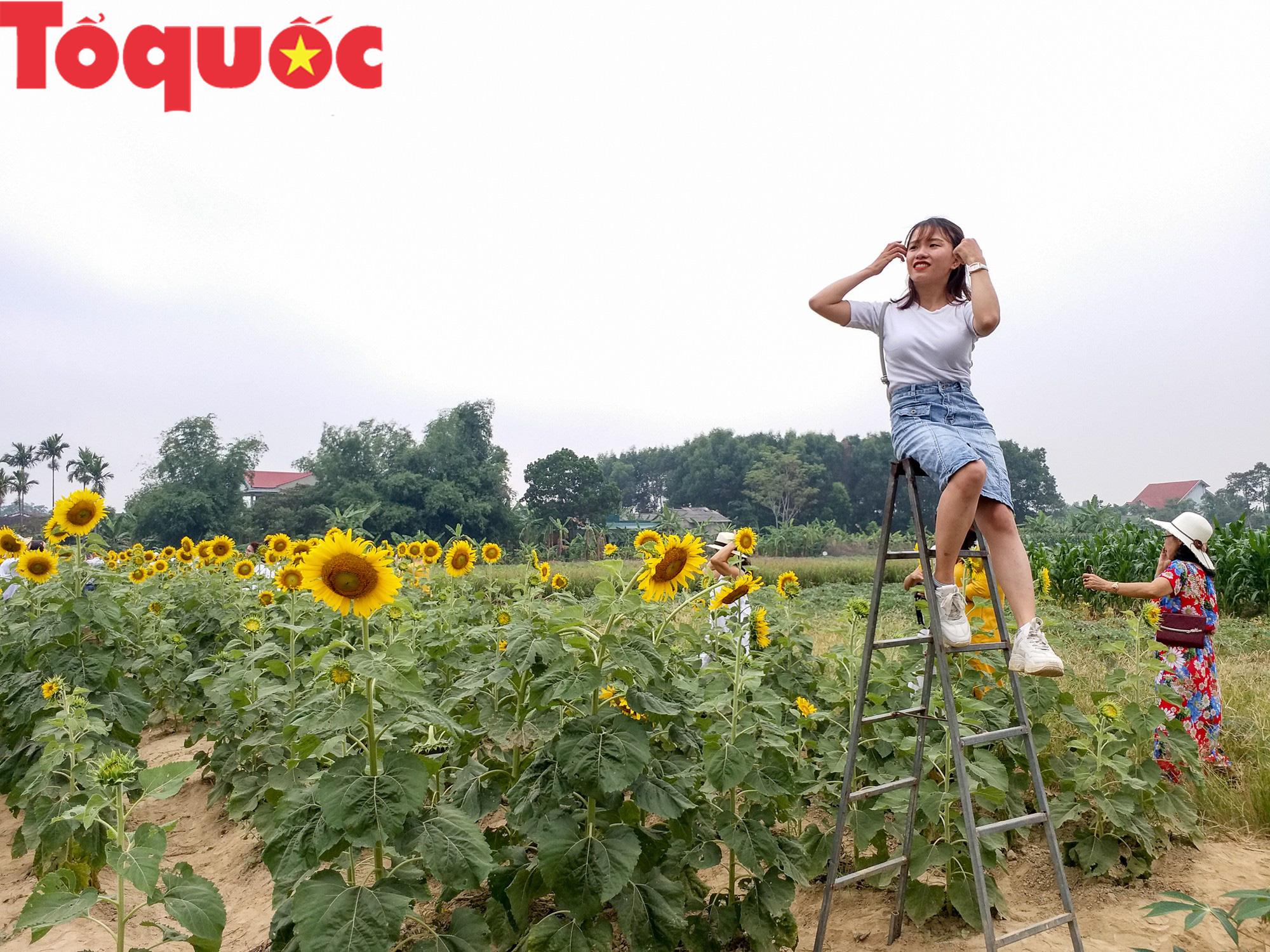 Hàng nghìn người đổ xô check in cánh đồng hoa hướng dương tại Huế - Ảnh 8.