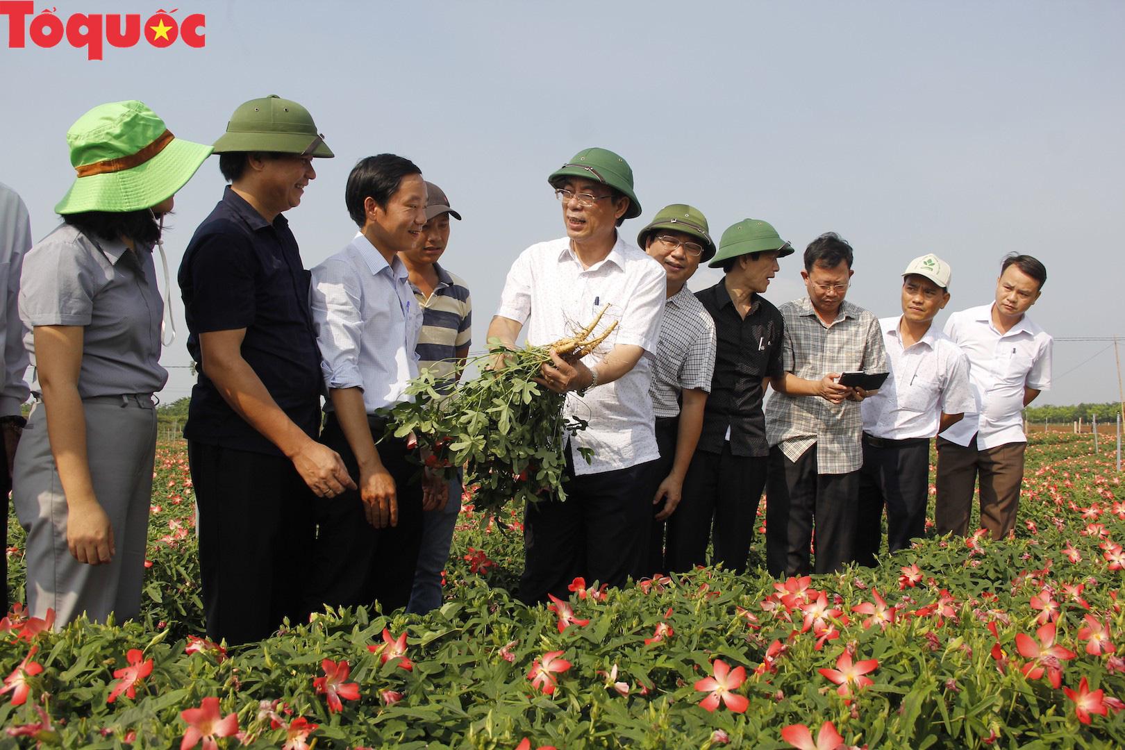 Quảng Trị nghiên cứu hình thành tour thăm giếng cổ Gio An và vườn sâm Bố Chính - Ảnh 2.