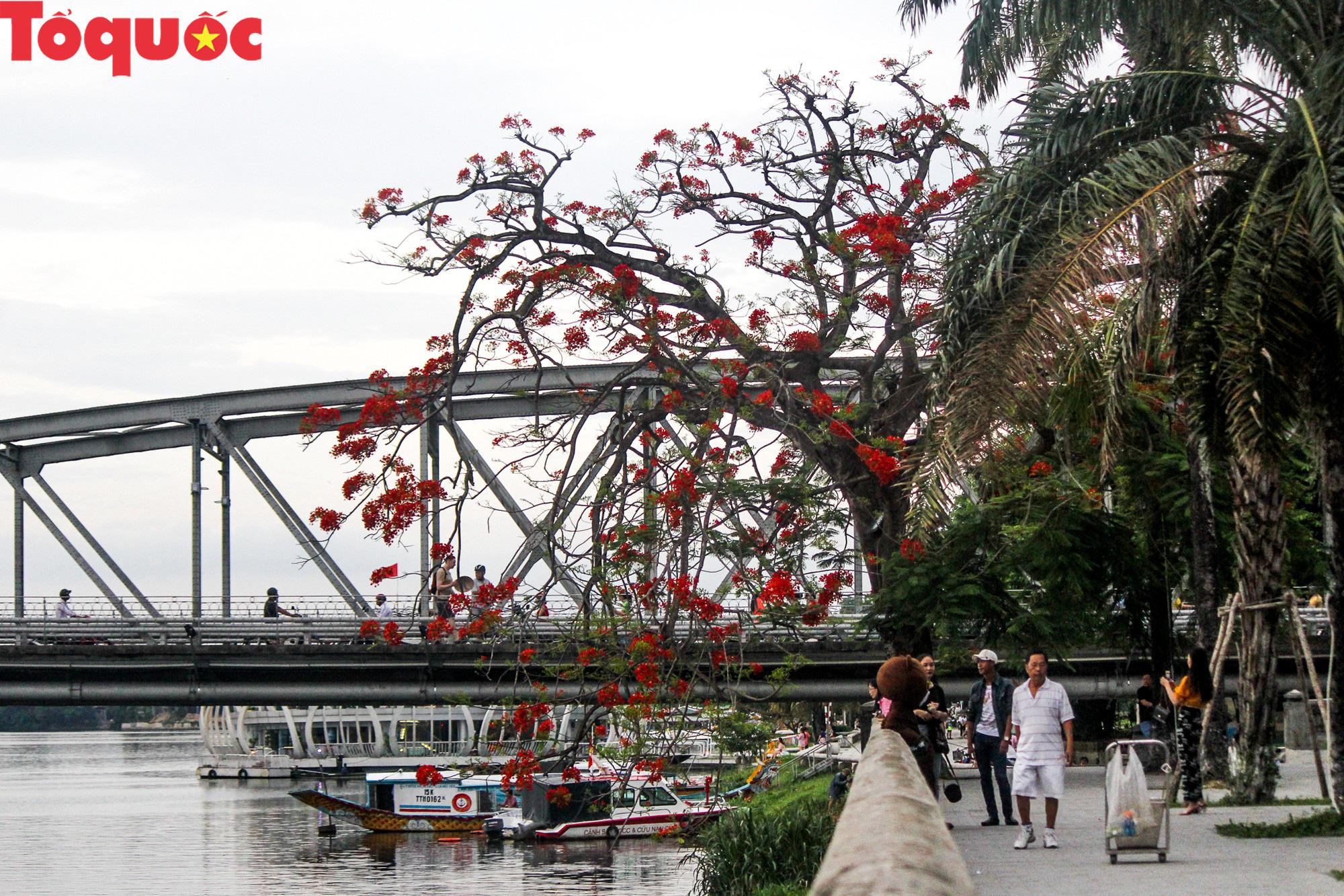 Đất trời xứ Huế đẹp rực rỡ trong mùa phượng vĩ nở hoa - Ảnh 17.