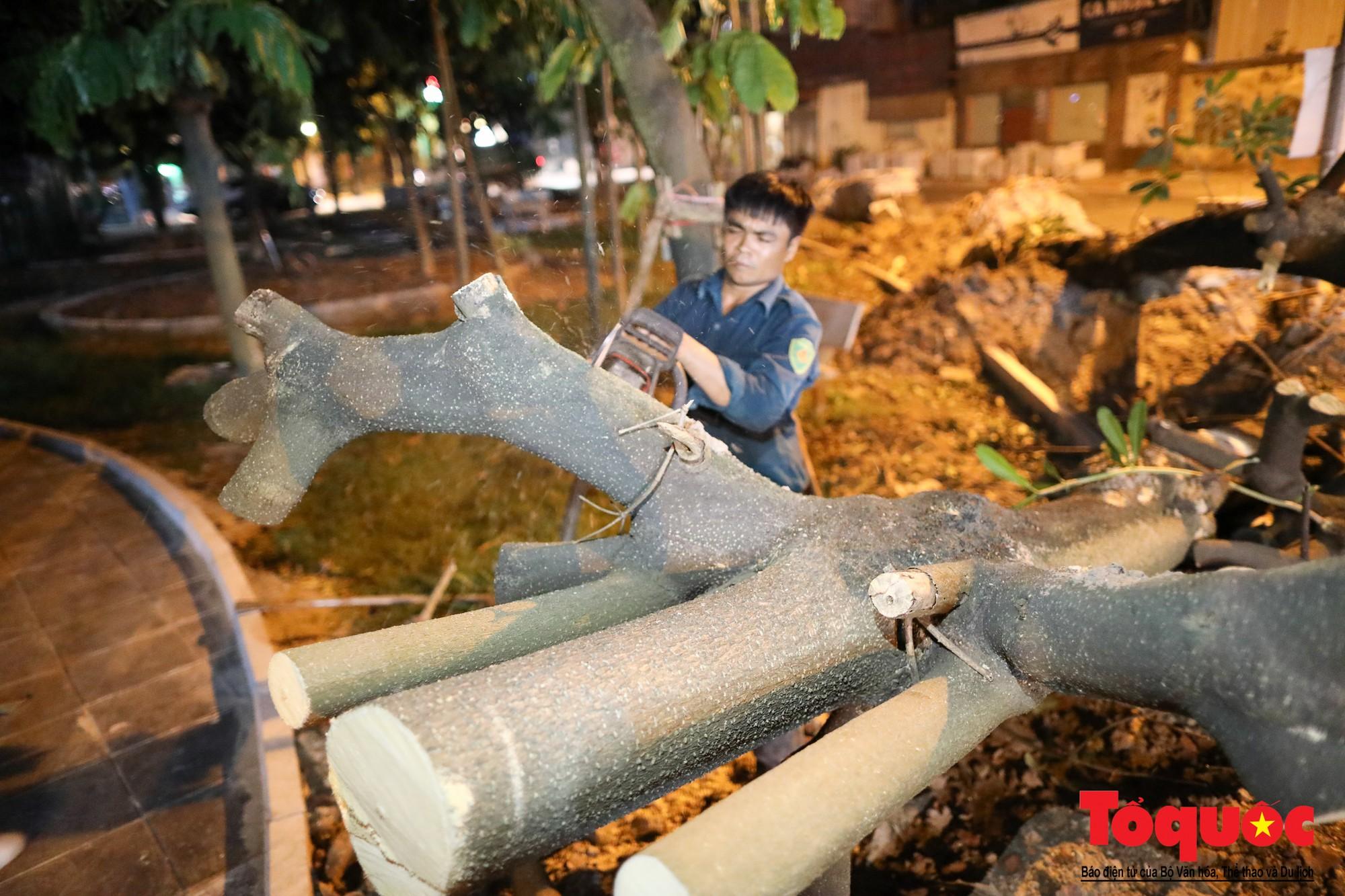 Trắng đêm bứng gốc, di dời gần 100 cây hoa sữa ven Hồ Tây lên bãi rác Nam Sơn (1)