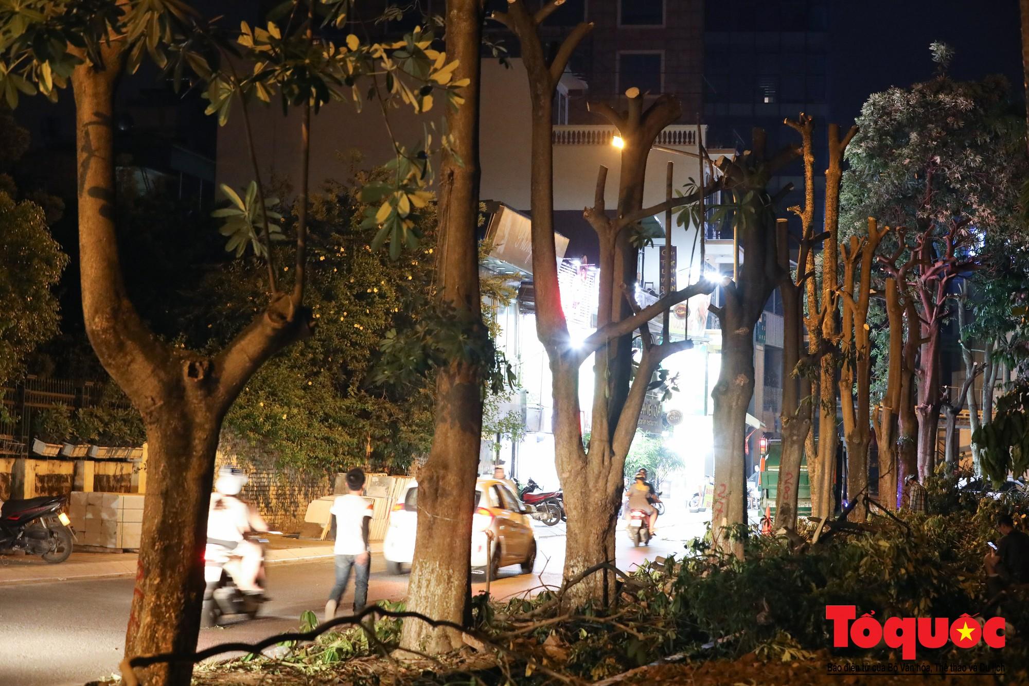 Trắng đêm bứng gốc, di dời gần 100 cây hoa sữa ven Hồ Tây lên bãi rác Nam Sơn (10)