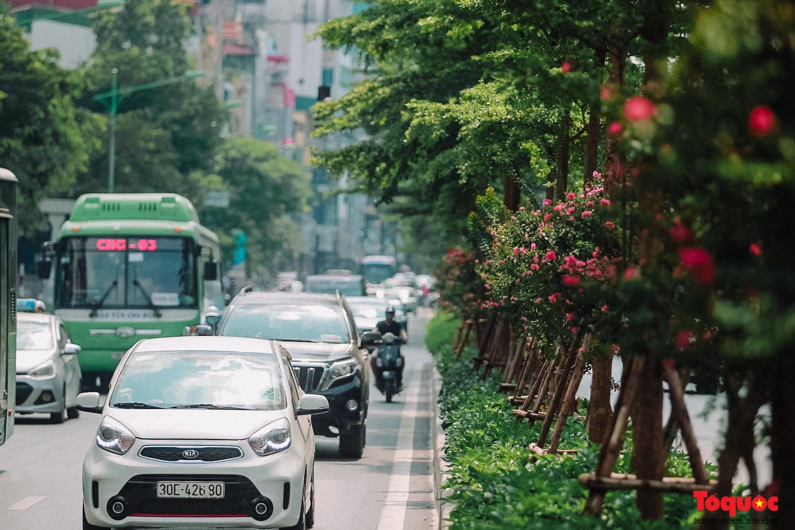 Ngắm con đường hoa tường vi dài cả cây số ở Hà Nội (1)