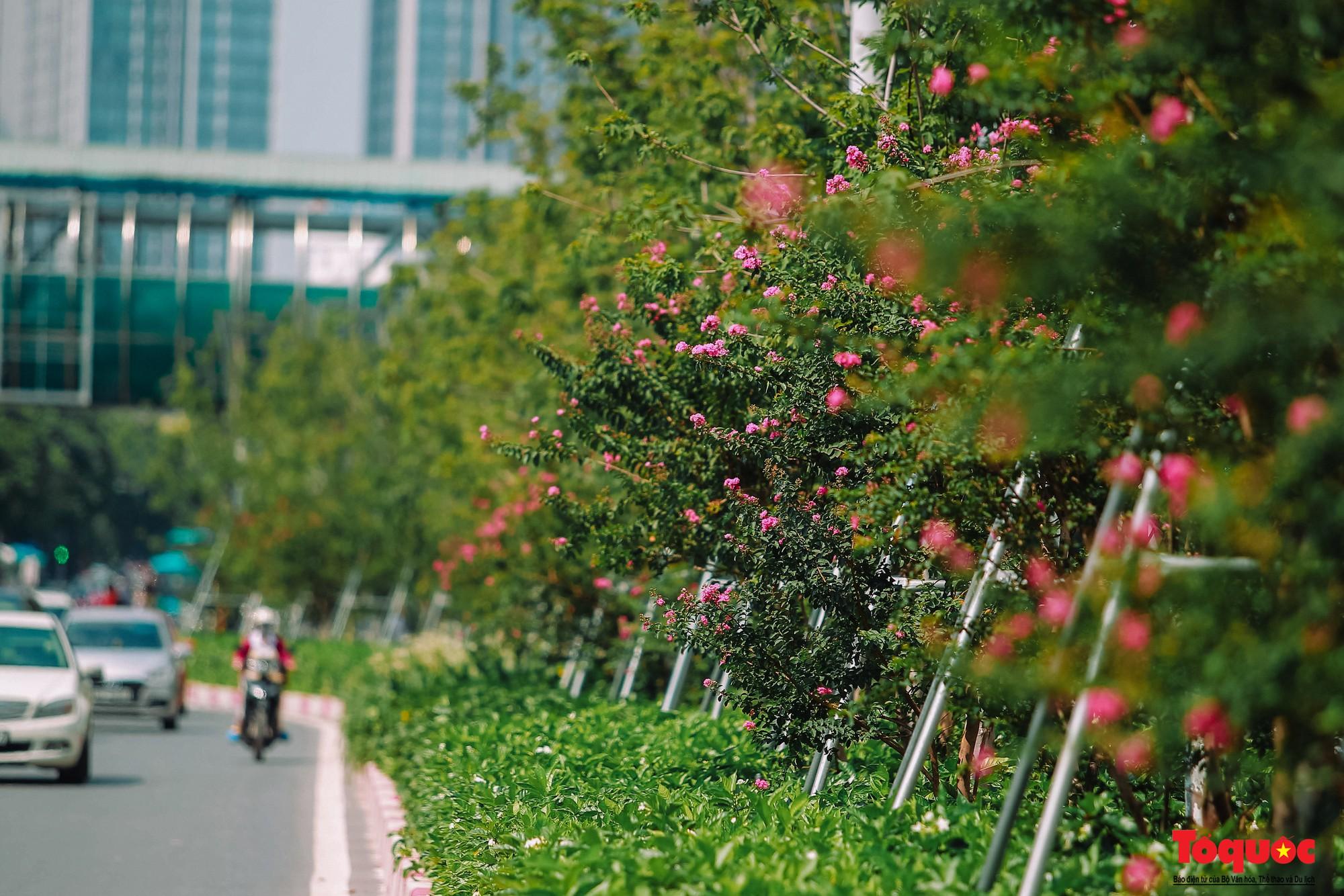 Ngắm con đường hoa tường vi dài cả cây số ở Hà Nội (13)