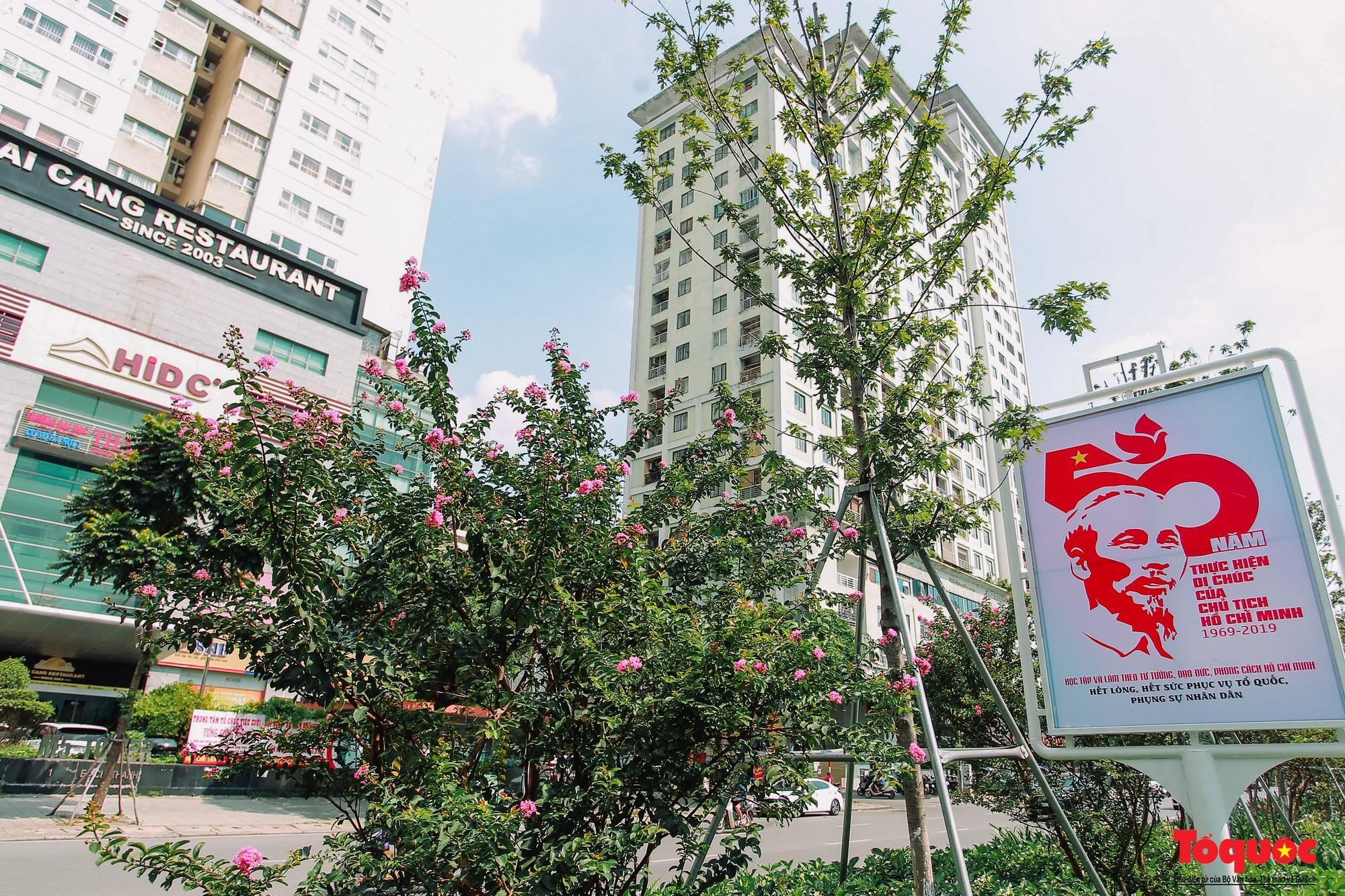Ngắm con đường hoa tường vi dài cả cây số ở Hà Nội (16)