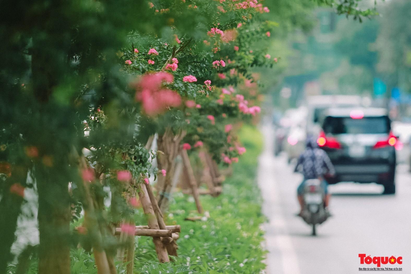 Ngắm con đường hoa tường vi dài cả cây số ở Hà Nội (3)