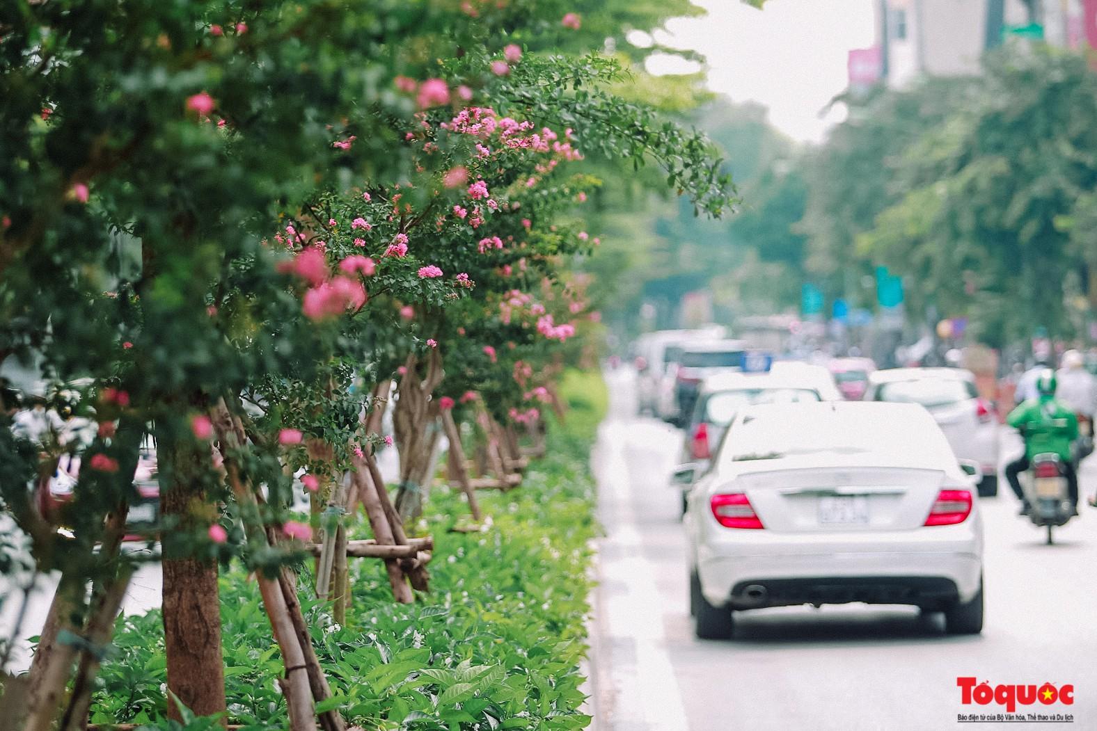 Ngắm con đường hoa tường vi dài cả cây số ở Hà Nội (4)