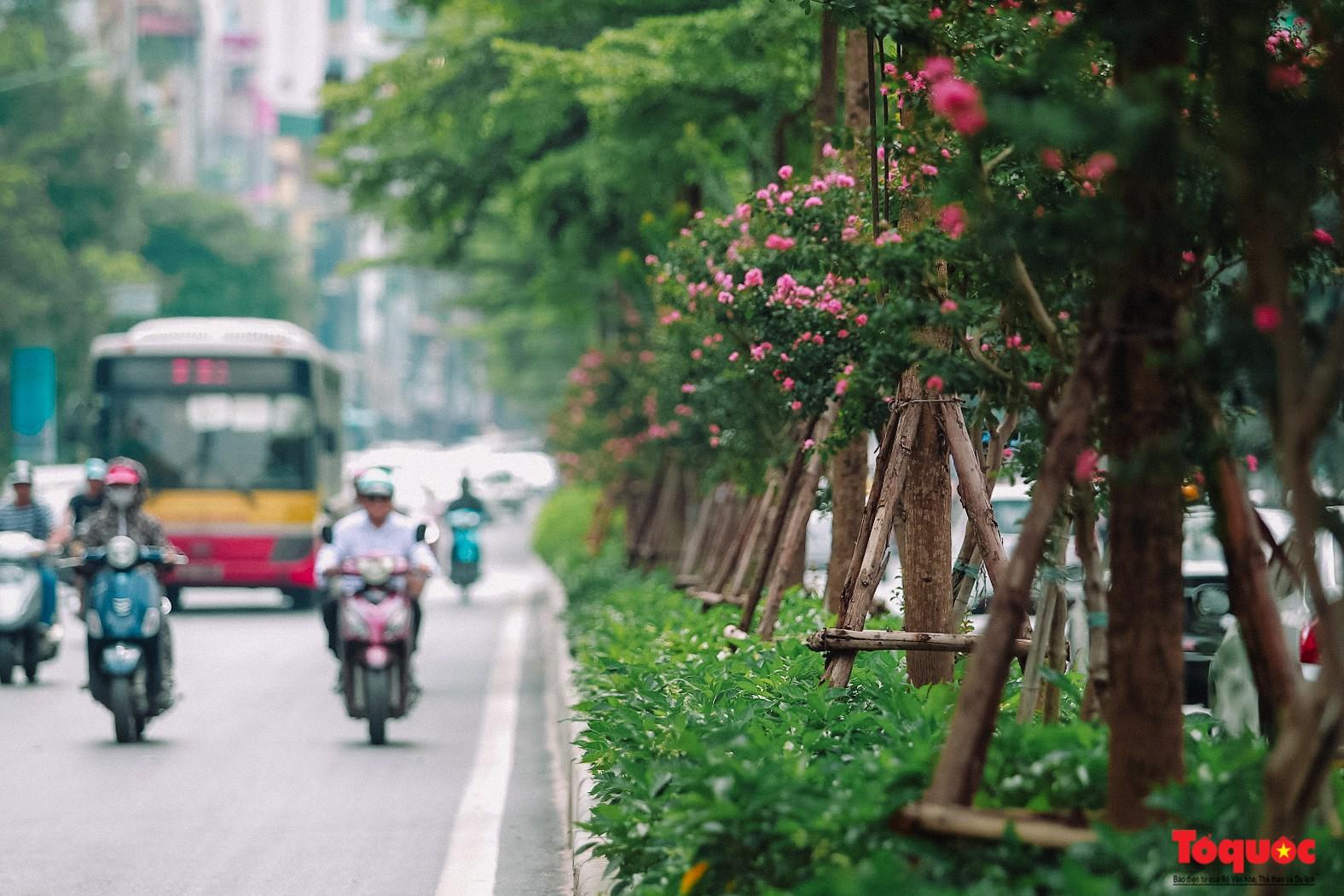 Ngắm con đường hoa tường vi dài cả cây số ở Hà Nội (7)