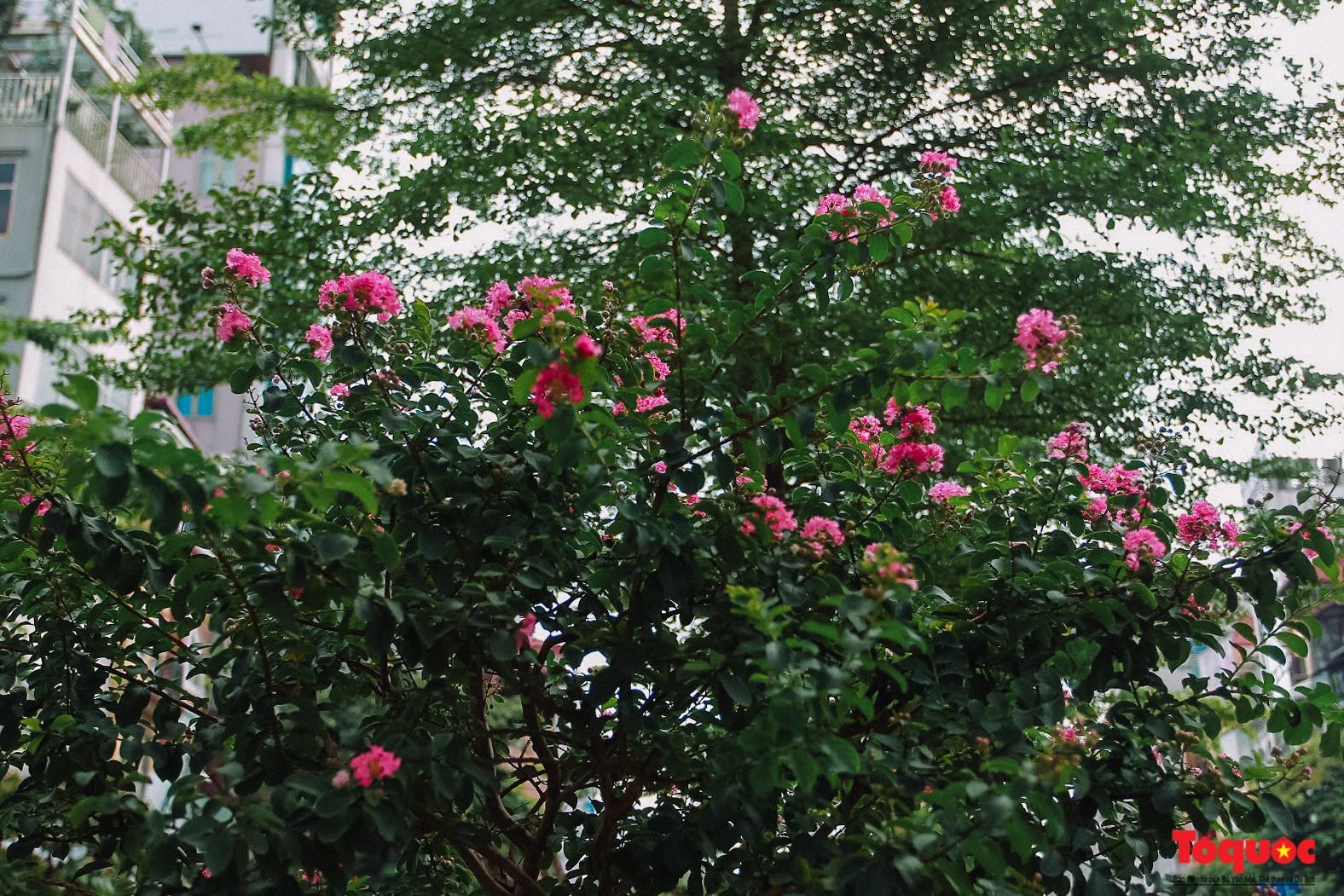 Ngắm con đường hoa tường vi dài cả cây số ở Hà Nội (8)