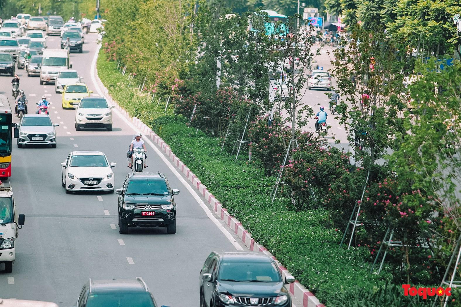 Ngắm con đường hoa tường vi dài cả cây số ở Hà Nội (9)