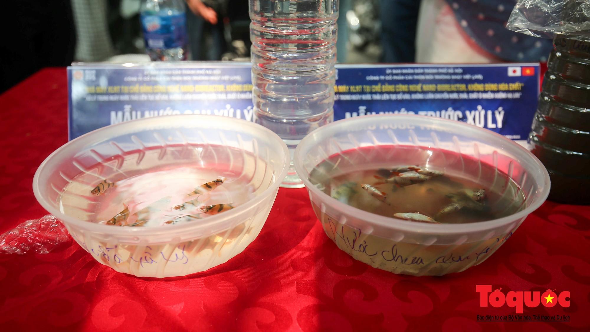Hà Nội Thả thử nghiệm gần 100 con cá Koi Nhật Bản xuống sông tô lịch và Hồ Tây (10)