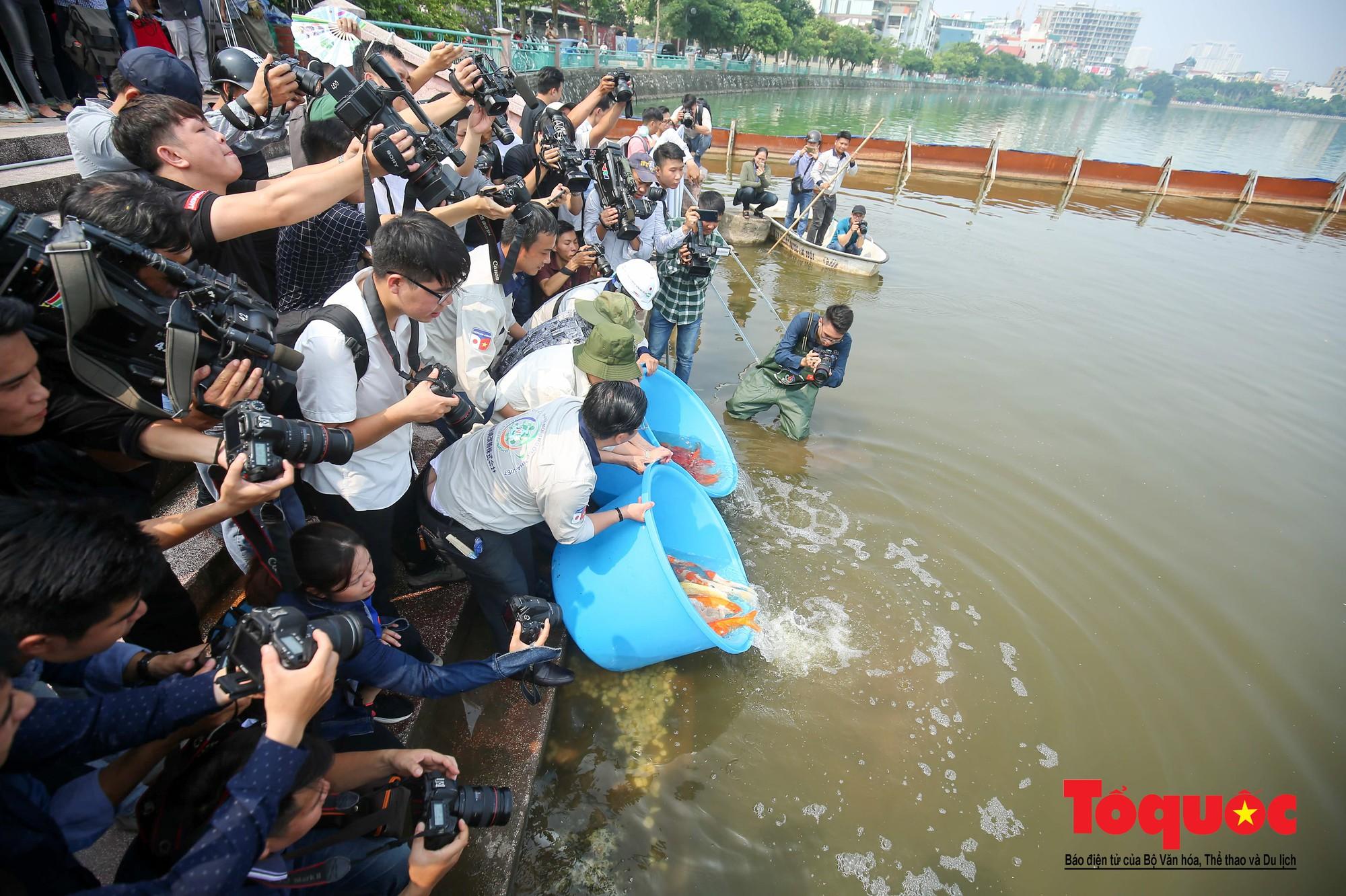 Hà Nội Thả thử nghiệm gần 100 con cá Koi Nhật Bản xuống sông tô lịch và Hồ Tây (12)