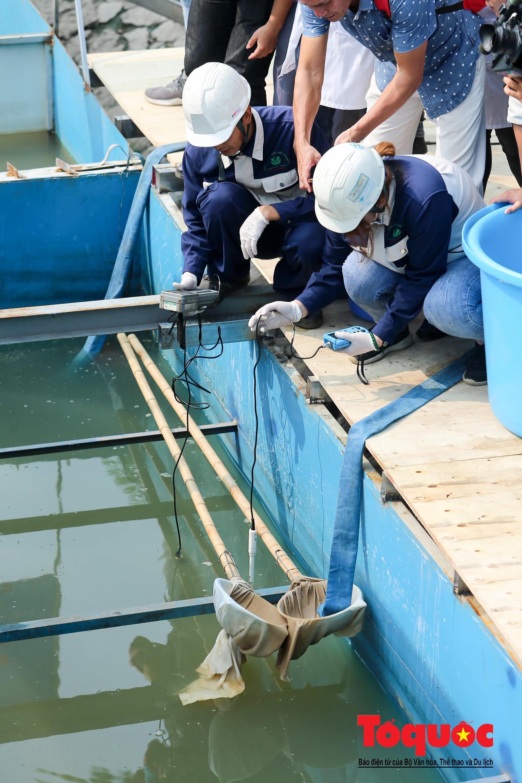 Hà Nội Thả thử nghiệm gần 100 con cá Koi Nhật Bản xuống sông tô lịch và Hồ Tây (2)