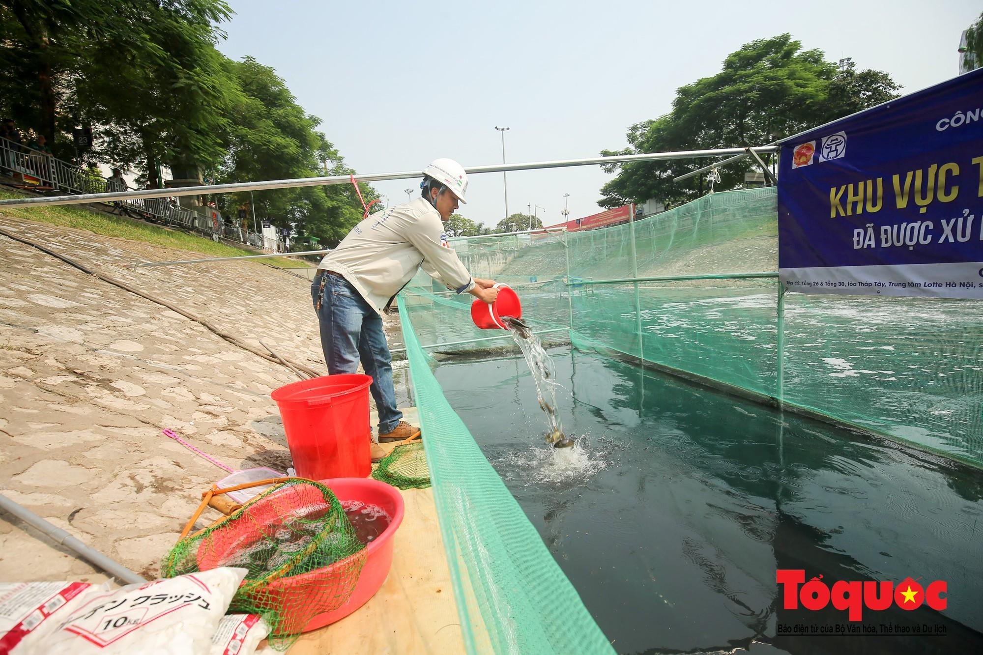 Hà Nội Thả thử nghiệm gần 100 con cá Koi Nhật Bản xuống sông tô lịch và Hồ Tây (9)