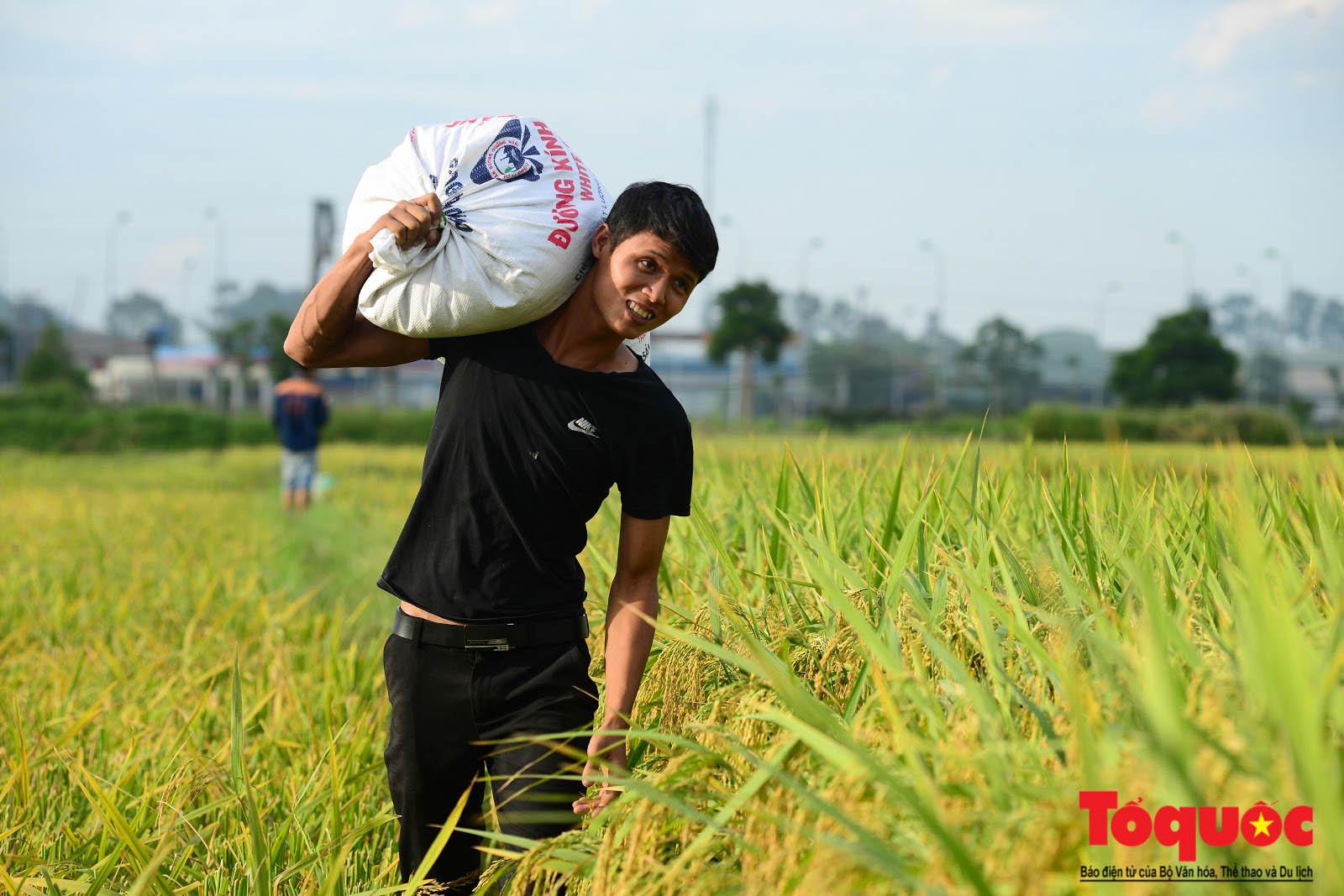 Bộ trưởng Nguyễn Xuân Cường: Năm 2020, xuất khẩu phải đạt cao hơn 41 tỷ USD  - Ảnh 1.