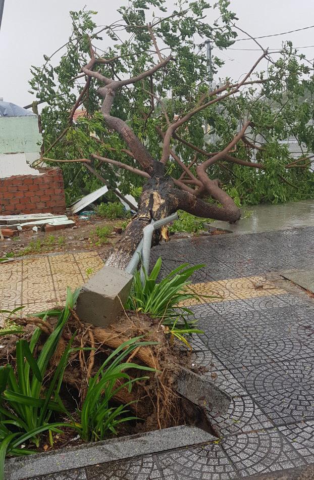 Đà Nẵng cho học sinh, sinh viên nghỉ học ngày 29/10 để các trường khắc phục hậu quả bão số 9 - Ảnh 1.