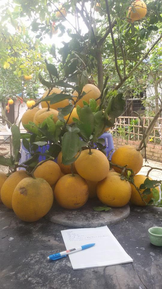 Nhà vườn 10.000m2 của nghệ sĩ Giang còi ngập hoa và trái cây - Ảnh 3.