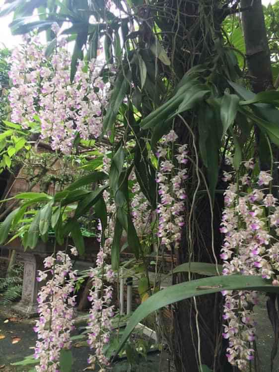 Nhà vườn 10.000m2 của nghệ sĩ Giang còi ngập hoa và trái cây - Ảnh 17.
