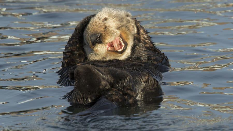 """""""Cười lật ghế"""" với loạt hình ảnh dễ thương từ cuộc sống động vật hoang dã - Ảnh 8."""