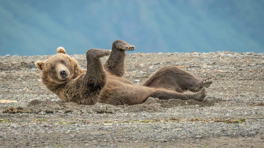 """""""Cười lật ghế"""" với loạt hình ảnh dễ thương từ cuộc sống động vật hoang dã - Ảnh 7."""