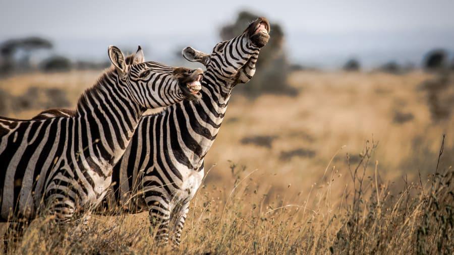"""""""Cười lật ghế"""" với loạt hình ảnh dễ thương từ cuộc sống động vật hoang dã - Ảnh 2."""