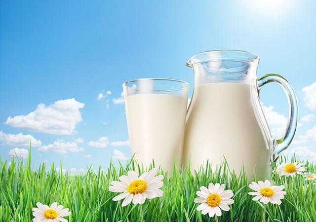 Dự án cung cấp sữa học đường Hà Nội chỉ có 3 nhà thầu nộp Hồ sơ dự thầu  - Ảnh 1.