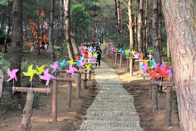 Ghé thăm đồi thông Tả Lèng như thấy mình lạc vào Đà Lạt của Lai Châu - Ảnh 5.