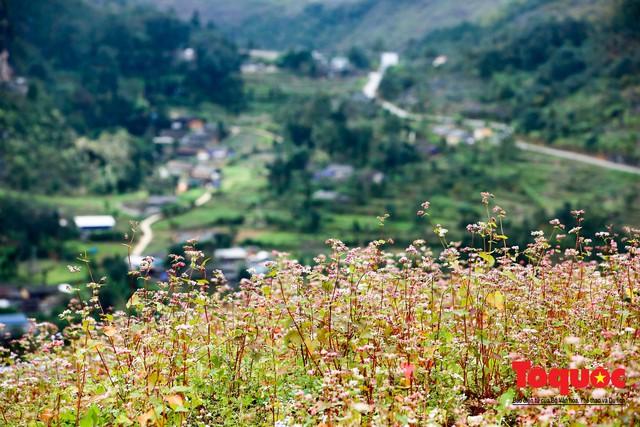 Hà Giang: Tam giác mạch bung nở rực rỡ sẵn sàng cho mùa Lễ hội hoa lớn nhất trong năm  - Ảnh 14.
