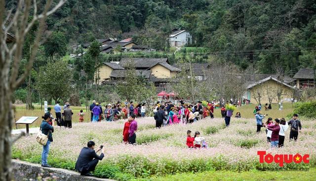 Hà Giang: Tam giác mạch bung nở rực rỡ sẵn sàng cho mùa Lễ hội hoa lớn nhất trong năm  - Ảnh 4.