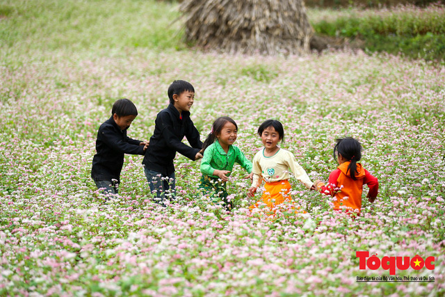 Hà Giang: Tam giác mạch bung nở rực rỡ sẵn sàng cho mùa Lễ hội hoa lớn nhất trong năm  - Ảnh 2.