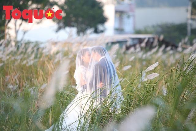 Đẹp nao lòng bên hoa lau trắng nở rợp trời Đà Nẵng - Ảnh 14.