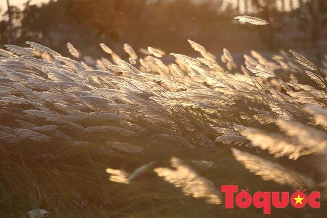 Đẹp nao lòng bên hoa lau trắng nở rợp trời Đà Nẵng - Ảnh 15.