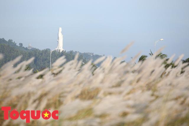Đẹp nao lòng bên hoa lau trắng nở rợp trời Đà Nẵng - Ảnh 3.