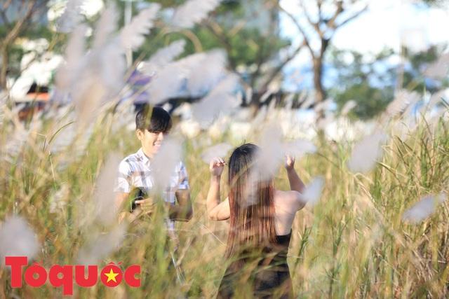 Đẹp nao lòng bên hoa lau trắng nở rợp trời Đà Nẵng - Ảnh 7.