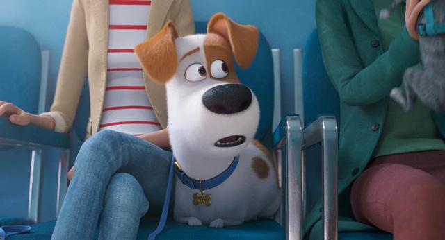 Trailer Đẳng cấp thú cưng 2 vừa được tung ra đã khiến người xem đứng ngồi không yên - Ảnh 6.