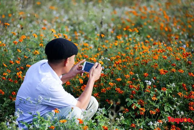Hà Giang mùa hoa cúc dại nhuộm vàng Cao Nguyên Đá - Ảnh 15.