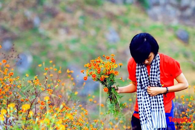 Hà Giang mùa hoa cúc dại nhuộm vàng Cao Nguyên Đá - Ảnh 4.