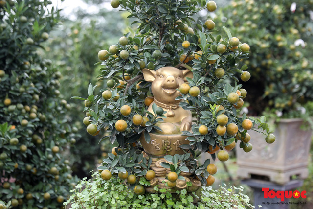 Độc đáo với quất bonsai trồng trên lưng heo đất phục vụ Xuân Kỷ Hợi 2019 - Ảnh 10.