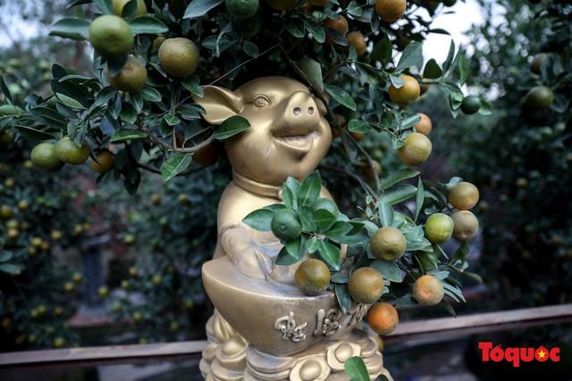Độc đáo với quất bonsai trồng trên lưng heo đất phục vụ Xuân Kỷ Hợi 2019 - Ảnh 9.