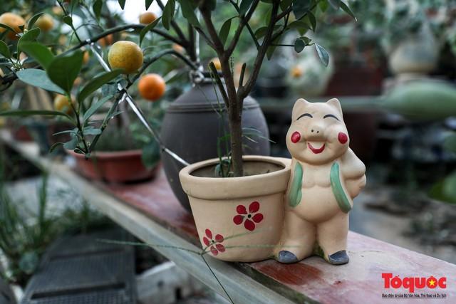 Độc đáo với quất bonsai trồng trên lưng heo đất phục vụ Xuân Kỷ Hợi 2019 - Ảnh 7.